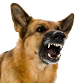 Aggressive Dog Training 101 | Dog Training