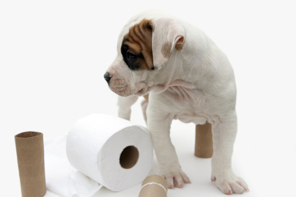some tips, however, that will make potty training or house training ...