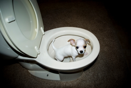 How To Train Dog To Pee Outside The House