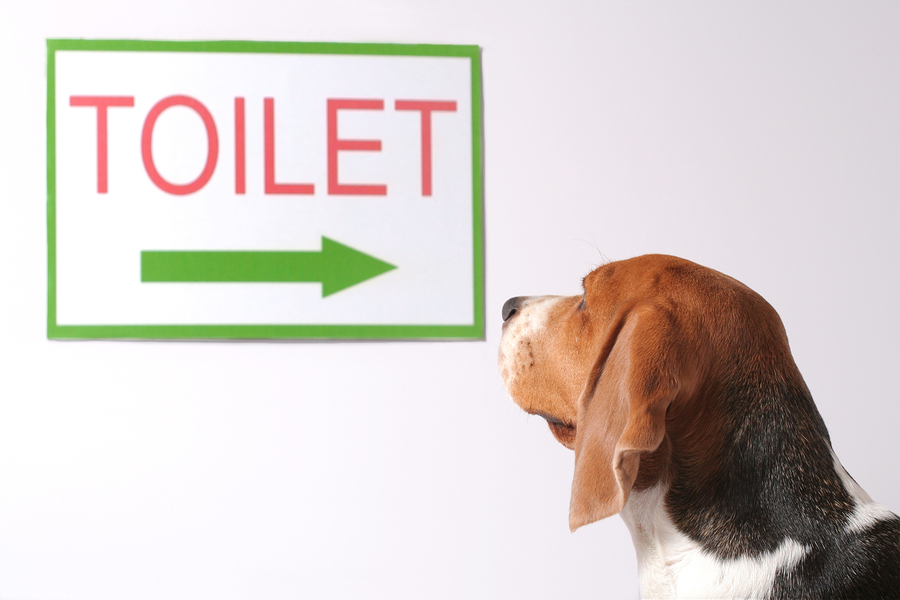 dog training archive how to potty train your dog With dog bathroom training