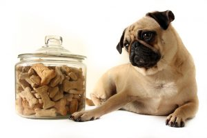 best food for dogs